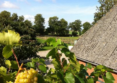 Ausblick vom Balkon im Herbst – leckere Weintrauben wachsen hinauf