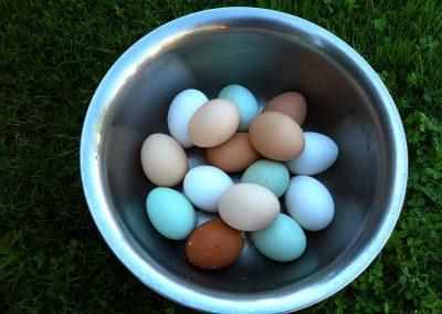 Bunte Eier auf dem Ferienhof Lüders-Köneke