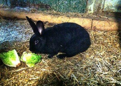 Kaninchen auf dem Ferienhof