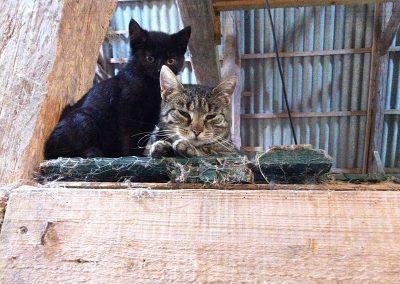 Katzen auf dem Ferienhof Lüders-Köneke