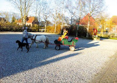 Kutsche fahren auf dem Ferienhof Lüders-Köneke auf Fehmarn