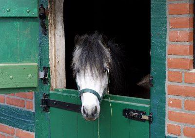 Ponys auf dem Ferienhof Lüders-Köneke